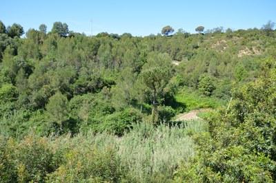 A Rubí hi ha una gran extensió de zona boscosa (foto: Ajuntament).