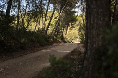 Moltes propostes tenen com a escenari el medi natural de la ciutat (foto: Ajuntament de Rubí – Lali Puig).