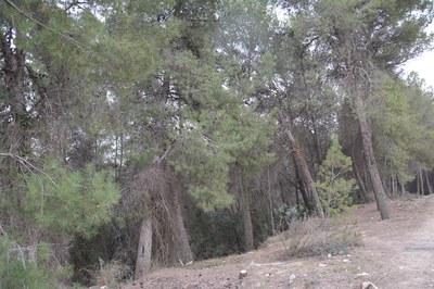 Fins el 15 d'octubre queda prohibit encendre foc als terrenys forestals sense la corresponent autorització.