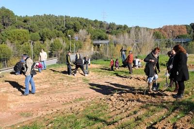 Fa dos anys, la plantada es va realitzar al Pinar (foto: Lídia Larrosa).
