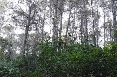 Aquestes tasques han de permetre reduir el risc d'incendi a les urbanitzacions i adequar les zones forestals per a usos de lleure.