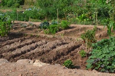 Un dels objectius que es persegueix amb aquest projecte és fomentar l'agricultura ocupacional.