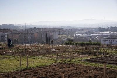 El nou reglament haurà de regular l'ús dels horts municipals (foto: Ajuntament de Rubí – Lali Puig).