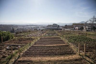 La producció dels horts es destina a les persones més vulnerables (foto: Ajuntament de Rubí – Lali Puig).