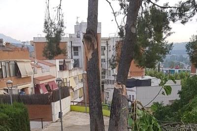 El pi va quedar greument afectat pel temporal de fa uns dies (foto: Ajuntament).