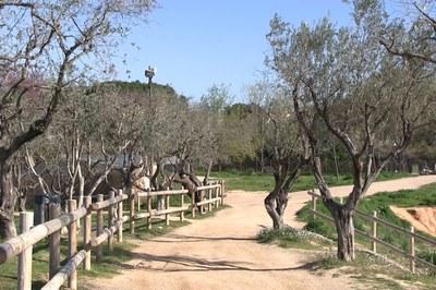 Els bosc de les oliveres és un dels espais més emblemàtics del parc.