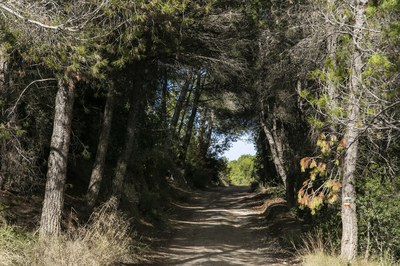 Aquests dies, cal extremar les mesures per evitar incendis forestals (foto: Ajuntament de Rubí – Lali Puig).