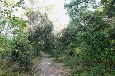 L'itinerari està farcit de roures, alzines, pins pinyoners, llorers i arboços, així com diverses espècies d'arbustives (foto: Ajuntament de Rubí – Localpres)