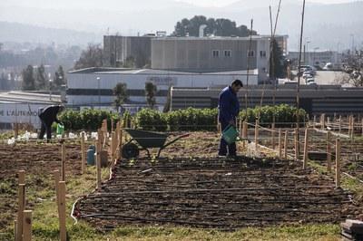 Diversos usuaris i usuàries ja cultiven els horts de Cova Solera (foto: Ajuntament – Lali Puig).
