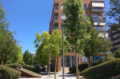 A la plaça Bonaventura Josa s'han plantat quatre 'acer sacharinum' (foto: Ajuntament).