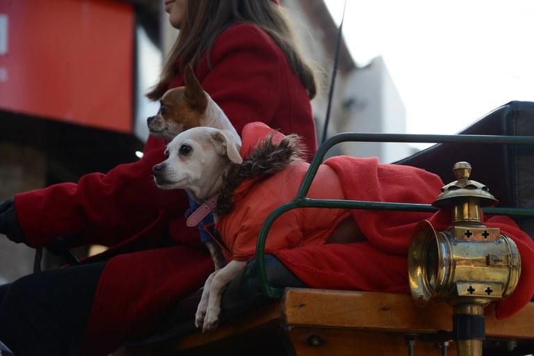 Els animals, protagonistes de la rua (foto: Localpres)