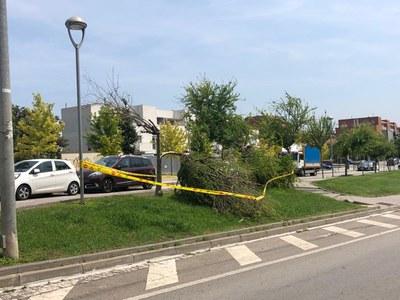 La Policia Local ha acordonat els arbres en risc de caure
