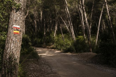 La xarxa la integren un total de 13 itineraris circulars amb diferents longituds i graus de dificultat (foto: Ajuntament de Rubí – Lali Puig).