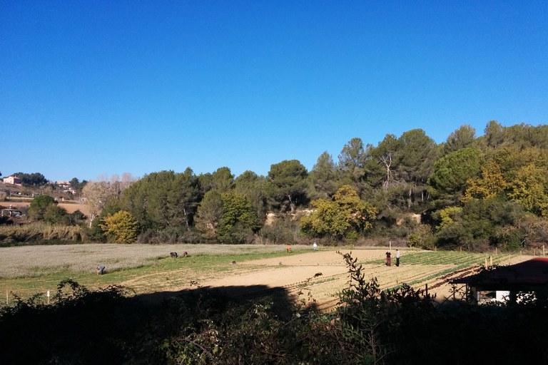 Actualment, l'Associació Agroecològica Can Feliu cultiva prop de mitja hectàrea de terreny