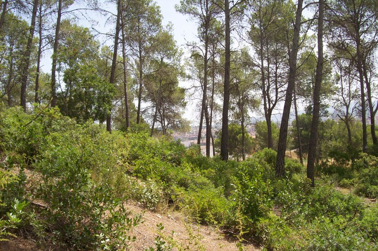 Manteniment del bosc III