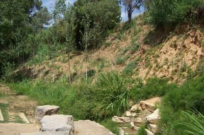 Font del torrent dels Alous.