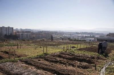 La instalación de Cova Solera cuenta con 56 parcelas individuales y dos reservadas a entidades (foto: Ayuntamiento de Rubí - Lali Puig).