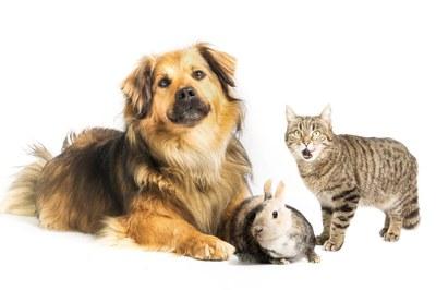 El objetivo del proceso participativo es recoger la opinión de la ciudadanía para mejorar el futuro Plan de Bienestar Animal (foto: Ayuntamiento de Rubí).
