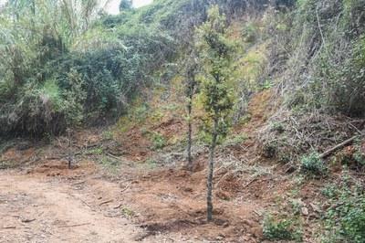 La primera plantación se ha iniciado esta semana (foto: Ayuntamiento de Rubí - Localpres).