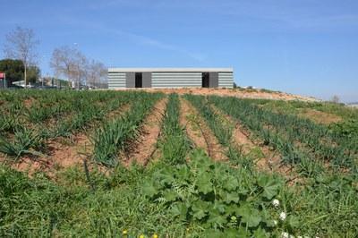 """Los huertos municipales están ubicados en Cova Solera, junto a la """"deixalleria""""."""