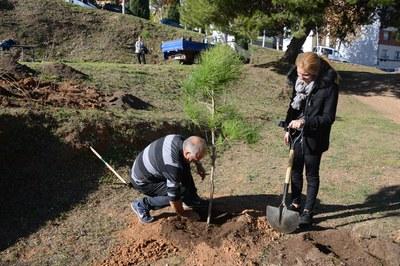 Los árboles se han plantado en Can Fatjó (foto: Localpres).