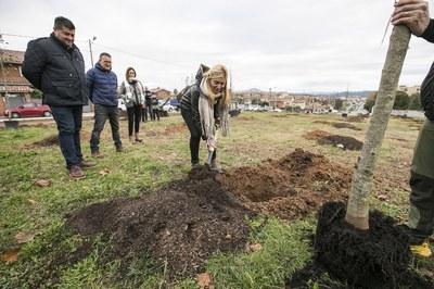 La plantada ha tenido lugar este domingo (Foto: Ayuntamiento-Lali Puig).