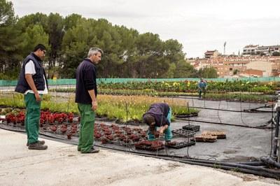 La Font del Ferro cultiva y comercializa flores y plantas al por mayor y al por menor (foto: Cesar Font).