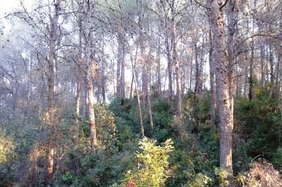 Hasta el 15 de octubre queda prohibido encender fuego en los terrenos forestales sin la correspondiente autorización.