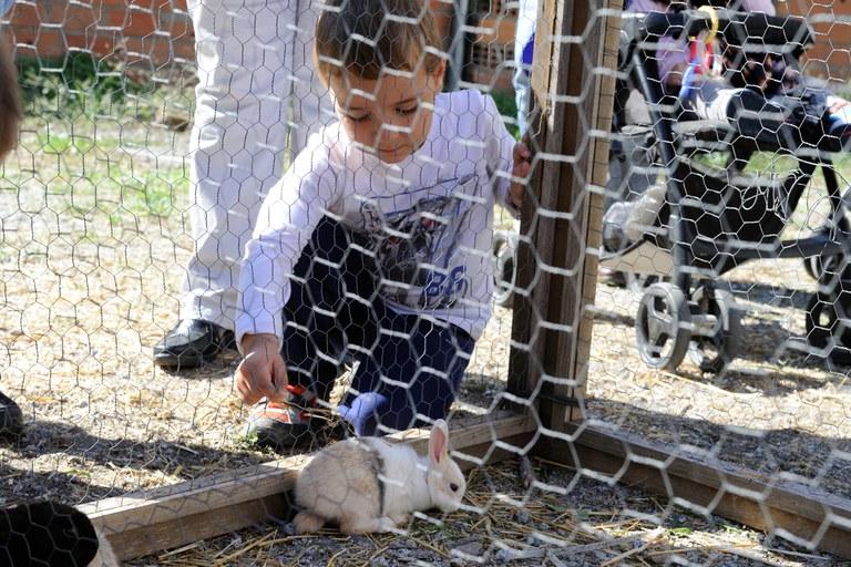 Los animales, también protagonistas de la feria (foto: Localpres)