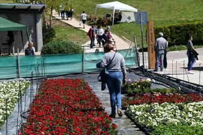 Las personas que han visitado la Font del Ferro han podido adquirir una gran variedad de plantas (foto: Localpres)