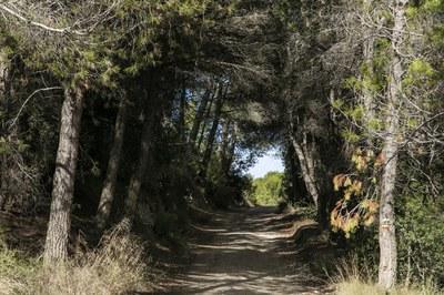 Estos días, hay que extremar las medidas para evitar incendios forestales (foto: Ayuntamiento de Rubí - Lali Puig).