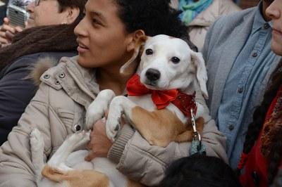 Durante la fiesta se ha bendecido los animales (foto: Localpres)