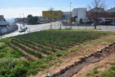 Este año, los recién estrenados huertos municipales de Cova Solera acogerán alguna de las actividades programadas.