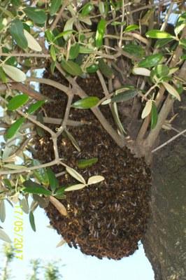 Enjambre de abejas II.