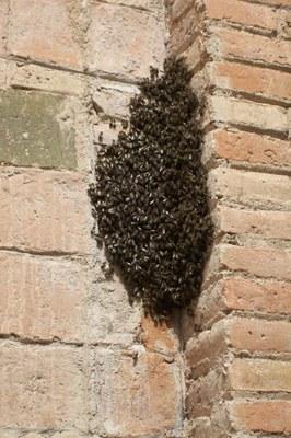 Enjambre de abejas I.