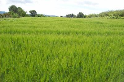 Campo durante la primavera.