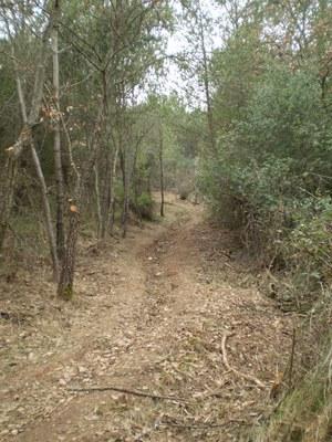 Camino de Can Feliu en Can Guilera.