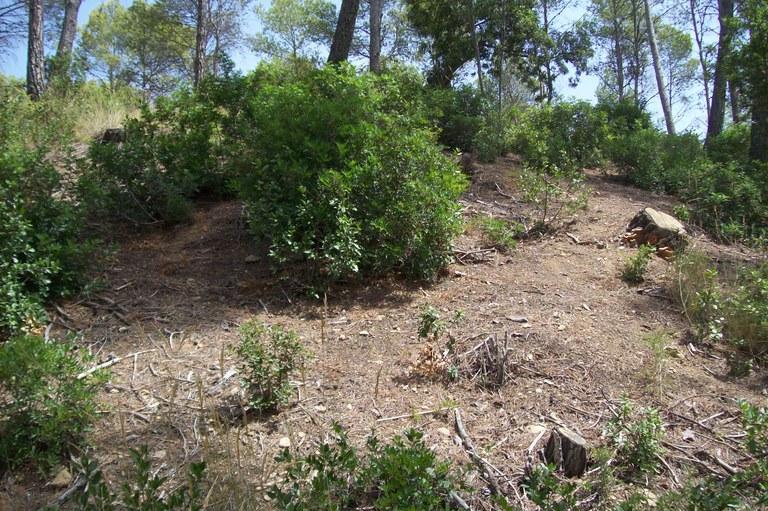 Mantenimiento del bosque I