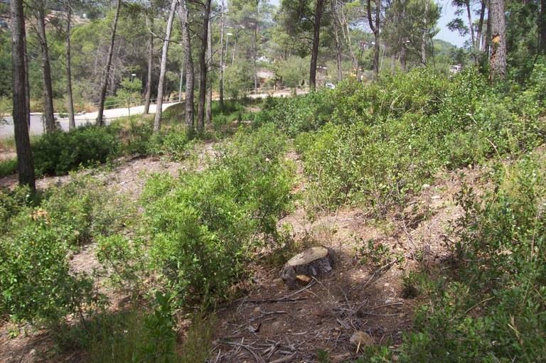 Mantenimiento del bosque II