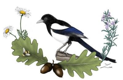 13. Zisis - Natura.