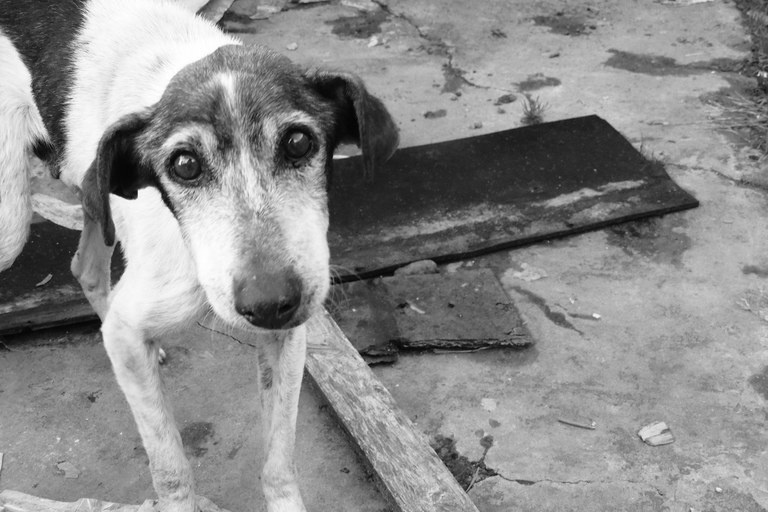 Animals_abandonaments_2
