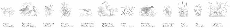 biodiversitat sencer