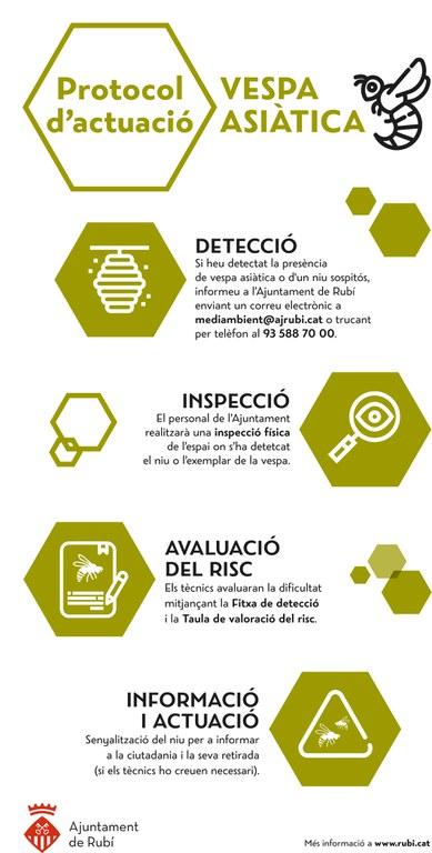 Infografia sobre el protocol d'actuació davant la presència d'exemplars de vespa asiàtica