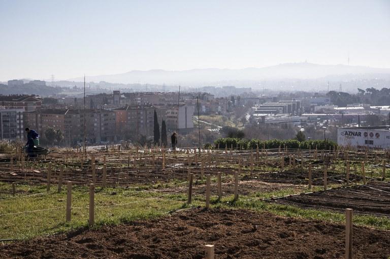 Horts municipals de Cova Solera